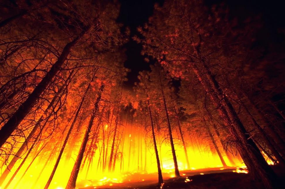 Forestfire2